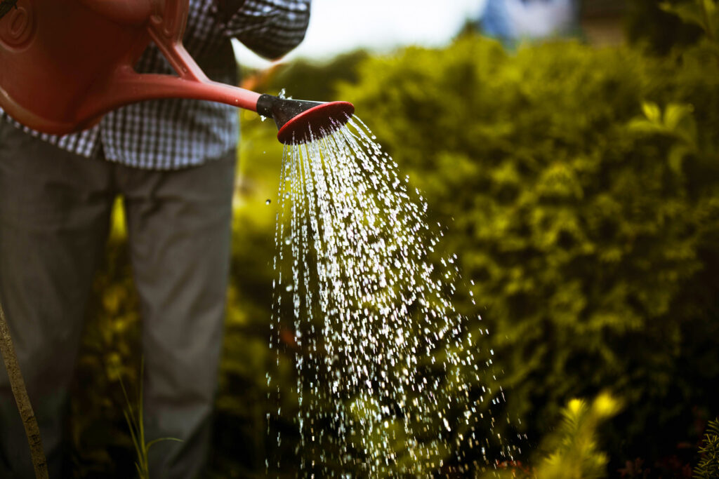 Man watering his garden with a watering can