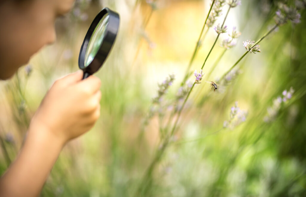 Child looks at a bee on wildflowers with a magnifying glass